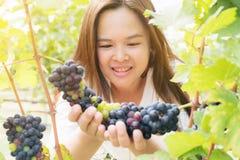 Winnicy pracownik sprawdza win winogrona w winnicy Obraz Royalty Free