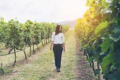 Winnicy pracownik sprawdza win winogrona w winnicy Zdjęcie Stock