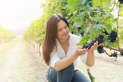 Winnicy pracownik sprawdza win winogrona w winnicy Fotografia Stock