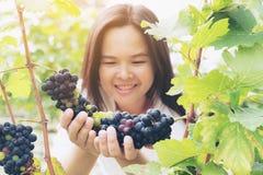 Winnicy pracownik sprawdza win winogrona w winnicy Obrazy Royalty Free