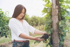 Winnicy pracownik sprawdza win winogrona w winnicy Zdjęcie Royalty Free