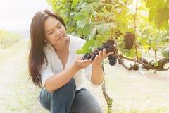 Winnicy pracownik sprawdza win winogrona w winnicy Obrazy Stock