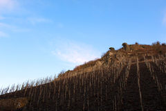 Winnicy przy Beilstein, Niemcy Obrazy Stock