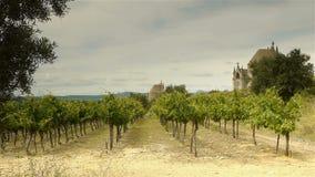 Winnicy przy starymi religijnymi kopułami, Languedoc Francja zdjęcie wideo