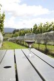 winnicy szklany czerwony wino Obraz Royalty Free