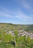 Winnicy w ahr dolinie, Niemcy Zdjęcia Stock