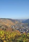 Winnicy w ahr dolinie, Niemcy Fotografia Stock