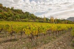 Winnicy w francuskiej wsi, Drome, Clairette De Umierający zdjęcie royalty free