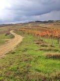 Winnicy w jesień Fotografia Stock