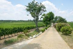 Winnicy w Languedoc Roussillon Zdjęcia Royalty Free