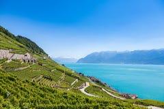 Winnicy w Lavaux regionie - Terrasses De Lavaux tarasy, Switz Obrazy Royalty Free