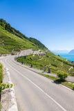 Winnicy w Lavaux regionie - Terrasses De Lavaux tarasy, Switz Obrazy Stock
