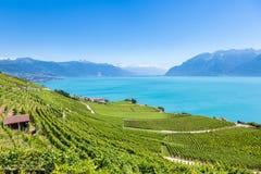 Winnicy w Lavaux regionie - Terrasses De Lavaux tarasy, Switz Obraz Stock