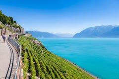 Winnicy w Lavaux regionie - Terrasses De Lavaux tarasy, Switz Zdjęcia Stock