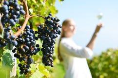 Winnicy w Lavaux, Szwajcaria Fotografia Stock