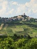 Winnicy w Oltrepo Pavese (Włochy) Zdjęcia Stock