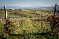 Winnicy w Sagrantino wina produkcji strefie blisko miasteczka Montefalco w regionie Umbria Włochy fotografia stock