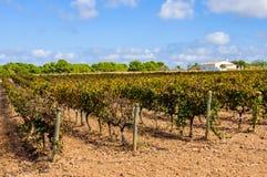 Winnicy w wsi w Formentera, Hiszpania Obrazy Royalty Free