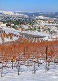 Winnicy w zima Obraz Stock