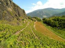 Winnicy wzgórze zdjęcie royalty free