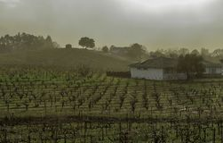Winnicy wzgórze z rzędami gronowi winogrady, domy i drzewa, obraz stock