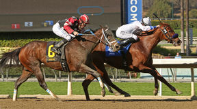 Winning an Allowance Race Stock Photos