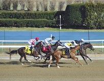 Winning at Aqueduct Racetrack stock photography