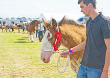 Winning foal at Nairn Show. Royalty Free Stock Images