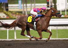 Winning Her First Race. ARCADIA, CA - 9 JAN: Jockey Rafael Bejarano guides 3 year-old filly, Extra Energy, to her first win at Santa Anita Park on Jan 9, 2010 in Royalty Free Stock Photo