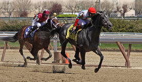 Winning Her First Race. JAMAICA, NY - APRIL 7: Silverette, under jockey Corey Nakatani, breaks her maiden at Aqueduct Race Track on April 7, 2012 in Jamaica, NY Stock Images