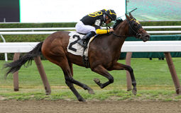 Winning Her First Race. SARATOGA SPRINGS - JUL 20: Thoroughbred jockey Joel Rosario guides 2 year-old Lignite to her first victory at Saratoga Race Course on Jul Royalty Free Stock Photography