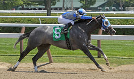 Winning Her First Race. SARATOGA SPRINGS - JUL 21: Jockey Rajiv Maragh pilots Clear Pasaj to her first win in a maiden race  on Jul 21, 2012 at Saratoga Race Royalty Free Stock Image