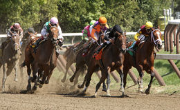 Winning Her First Race. SARATOGA SPRINGS - SEPT 2: Jockey Ramon Dominguez (orange cap) pilots Cue The Moon to her maiden victory in at Saratoga Race Course on Stock Photography