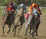 Winning Her First Race. ARCADIA, CA - FEB 16: Jockey Rafael Bejarano pilots Midnight Lucky (gray horse) to her first win at Santa Anita Park on Feb 16, 2013 in Stock Photos