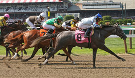 Winning Her First Race. SARATOGA SPRINGS, NY - JUL 18: Graeme Crackers, with Jose Ortiz up, stretches out to win her first race, at Saratoga Race Course on July Stock Images