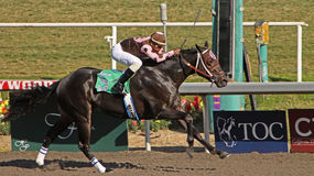 Winning His First Race Stock Image