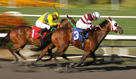 Winning  His First Race Royalty Free Stock Image