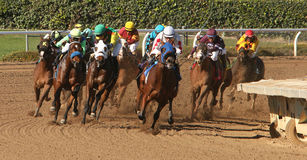 Winning His First Race. ARCADIA, CA - DEC 26: Jockey Elvis Trujillo (white cap) leads the field en route to victory aboard 2 year-old colt Hurry Up Henry in a stock image