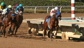 Winning His First Race. ARCADIA, CA - DEC 26: Jockey Elvis Trujillo (white cap) leads the field en route to victory aboard 2 year-old colt Hurry Up Henry in a stock photography