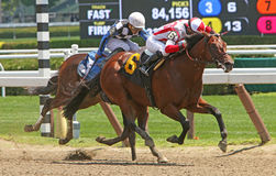 Winning His First Race. SARATOGA SPRINGS, NY - JUL 20: Tax Package ( jockey Irad Ortiz up) breaks his maiden, winning the 1st race at Saratoga Race Course on royalty free stock photography
