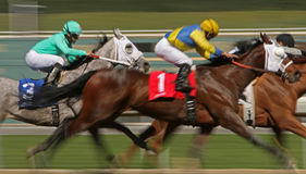 Winning a Maiden Race Royalty Free Stock Image