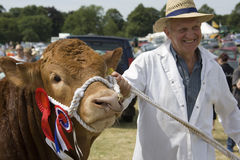 Winning Prize Bull - Agricultural Show - England. A prize bull and its owner at an agricultural fair in North Yorkshire in the United Kingdom Stock Images