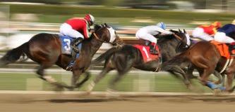 Winning The San Carlos Stakes Stock Image