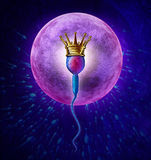 Winning Sperm. Human Fertility concept with a close up of microscopic sperm or spermatozoa cell wearing a gold crown swimming towards a female egg cell to Royalty Free Stock Photography