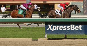 Winning on the Turf Course Royalty Free Stock Photo