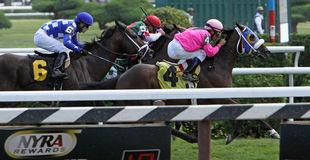 Winning a Turf Race Stock Photography