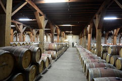 Wino baryłki przy wytwórnią win Santa Rita Zdjęcie Royalty Free