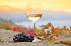 Wino i winogrona Zdjęcie Stock