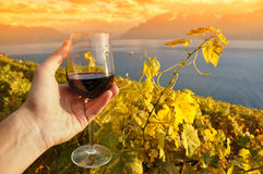 Wino i winogrona Zdjęcia Stock