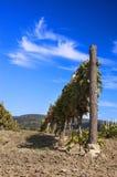 wino jard Zdjęcie Stock